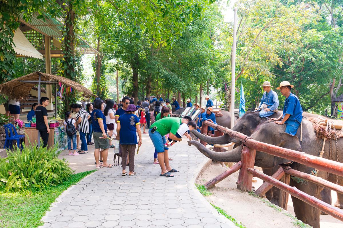 ศูนย์อนุรักษ์ช้าง